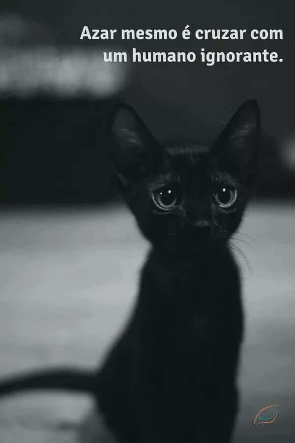 Sexta feira 13.. Se você tem uma vida ruim, o problema é seu, e não dos gatos pretos!