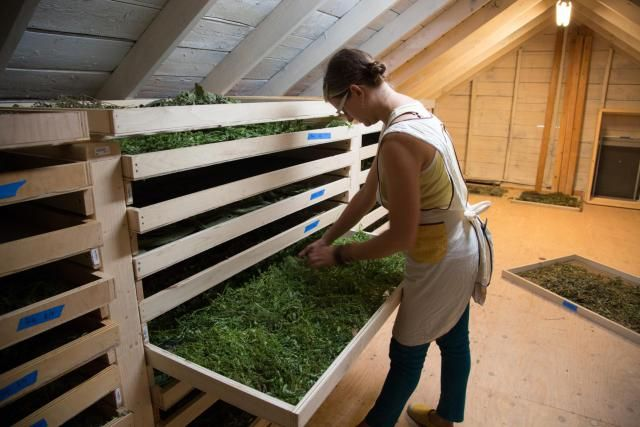 Beat the Small Farm Winter Blues With These Projects: Make a Seed Starting Shelf