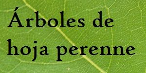 M s de 25 ideas incre bles sobre jard n de hoja perenne en for Arboles de jardin de hoja perenne