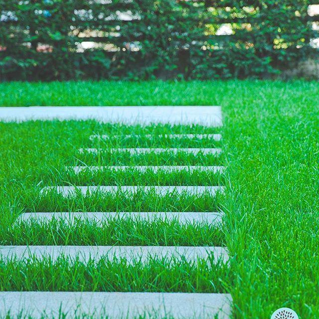 Steps leading up to summer! *View of our green garden.  Βήματα που οδηγούν στο καλοκαίρι!  *Εικόνα από τον κήπο μας!