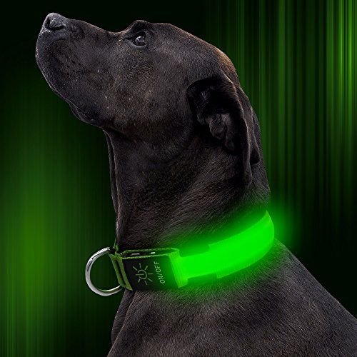 Illumifun LED Dog Collar USB Rechargeable Adjustable Nylon Webbing Flashing Light Up Collar with D-ring Makes Your Pet Visible Safe and Seen for Small Medium Large Dogs