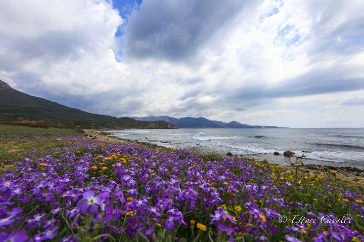 Il promontorio di #CapoPecora, punta estrema delle coste della provincia, è un paradiso per gli amanti della paleontologia e dei fossili, testimoni dell'antichità geologica del luogo.
