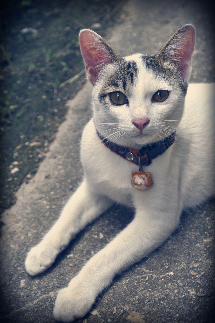 """cat """"Jiw"""" :D"""