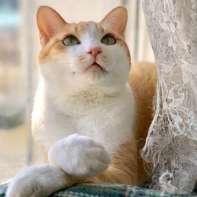 ごますりさんが日当たりのいい窓際のベッドに入り浸った結果、 グーグルアースの自宅写真に写りこむという事案が発生😂 皆様の猫ちゃんもいつの間にか撮られてる可能性、ありますよ!!! #窓際族  #背中の毛づくろい中  #せっかくならキメ顔で写って欲しかった  #グーグルアース容赦無し ・ ・ #猫 #猫部 #ねこらぶ #ねこすたぐらむ #日向ぼっこ  #茶トラ白 #茶トラ #ちゃしろ #茶しろ組 #みんねこ #picneko #pecoねこ部 #ふわもこ部 #ねこばか #愛猫 #猫との暮らし #ニャルソック  #catstagram #catgram #instacats #gingercat #orangecat #catlover  #meowbox #🐱