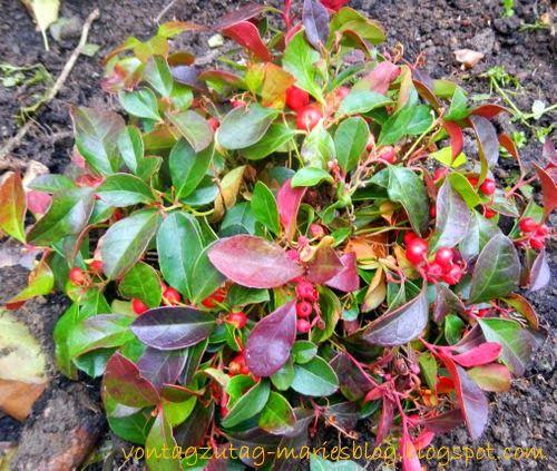 Von Tag zu Tag - Maries Blog: Der immerblühende Garten
