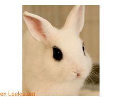 Conejo se ha quedado sin hogar  #Adopción #adopta #adoptanocompres #adoptar #LealesOrg  Contacto y info: Pulsar la foto o: https://leales.org/animales-en-adopcion/conejos-en-adopcion/conejo-se-ha-quedado-sin-hogar_i2652 ℹ  Jacobito es un conejo que se ha quedado sin hogar tras la muerte de su dueño en este momento nadie puede hacerse cargo de él y necesita urgentemente una familia que pueda darle una nueva vida. Es muy pequeñito y no causa ninguna molestia es completamente blanco a excepción…