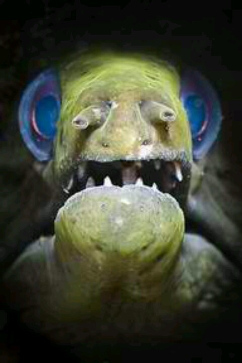 Image Gallery Scary Eel