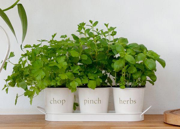 74 Best Garden Design Images On Pinterest Vegetable