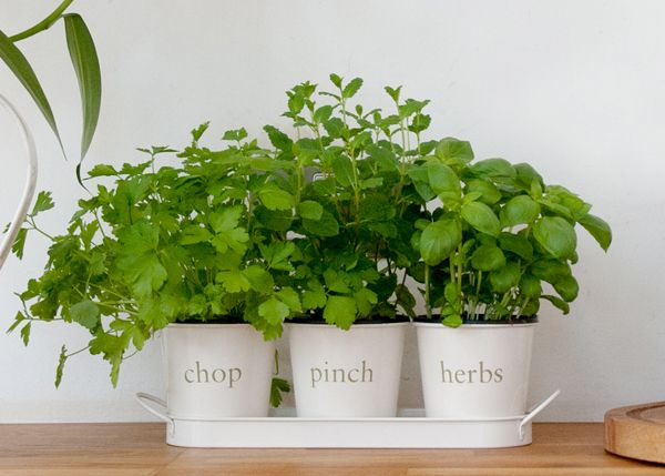 Herb Planters For Kitchen Home Design Ideas And Pictures