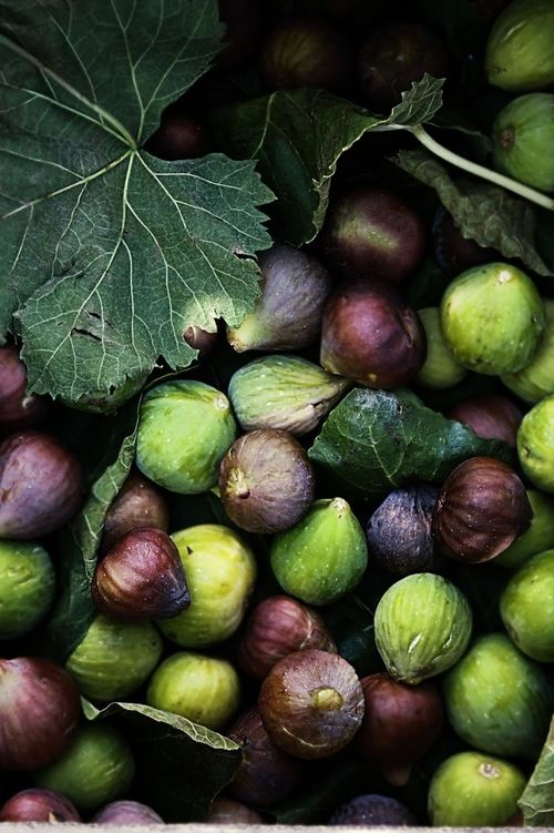 4himglory:  Figs (Link to Recipe for Fig Jam) | Plates & Platters