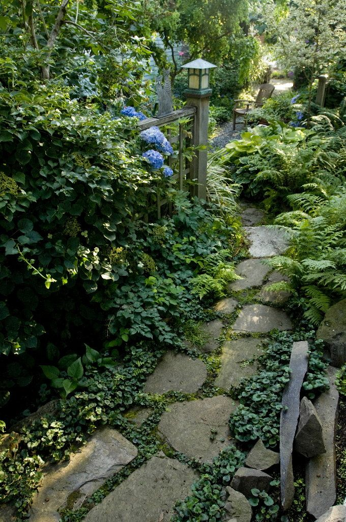 love the ground cover in between the flagstones and the ferns and hydrangeas on the side.