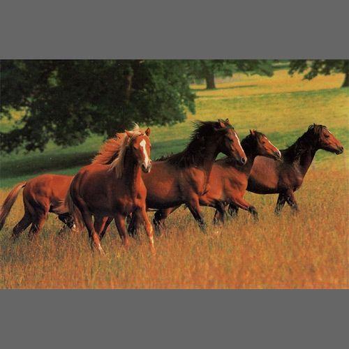 Running Horse wall mural wallpaper, 4 part 1468 Animal