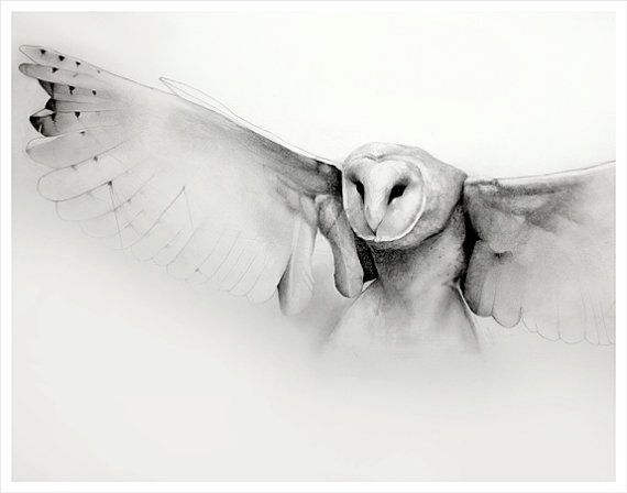 Flying Barn Owl Pencil Drawing Art Print By TheHauntedHollowTree