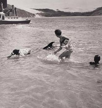 Eric Lee-Johnson Opo: The Hokianga Dolphin