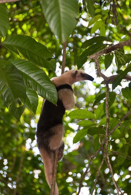 Río Plátano Biosphere Reserve, Honduras World heritage
