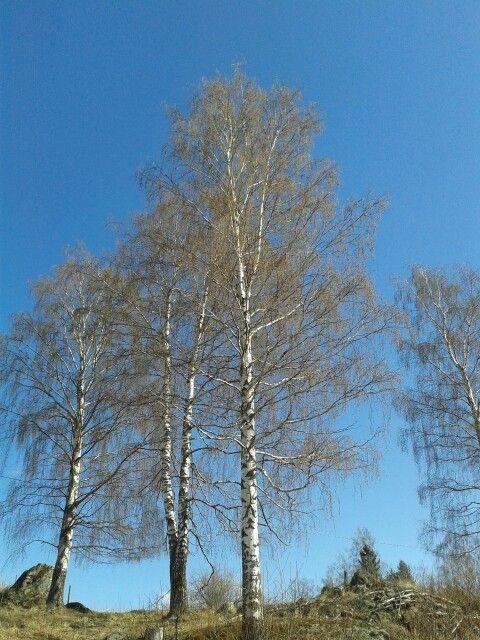 Taipalsaari Finland