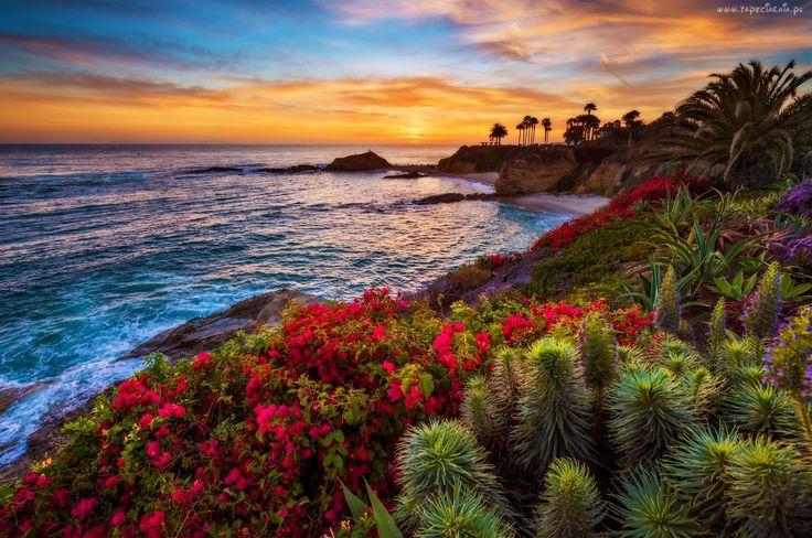 Zachód Słońca, Morze, Laguna, Kwiaty, Wybrzeże