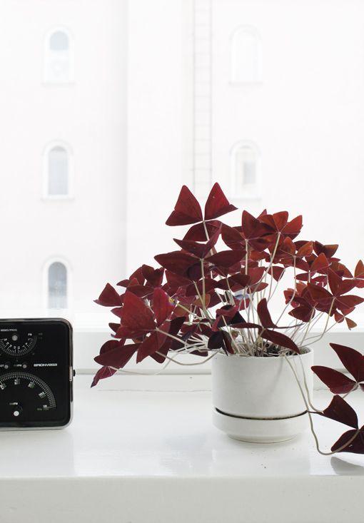 Un peu de rouge pour vos plantes pour contraster avec un intérieur pâle #botanique #gardens #dccv