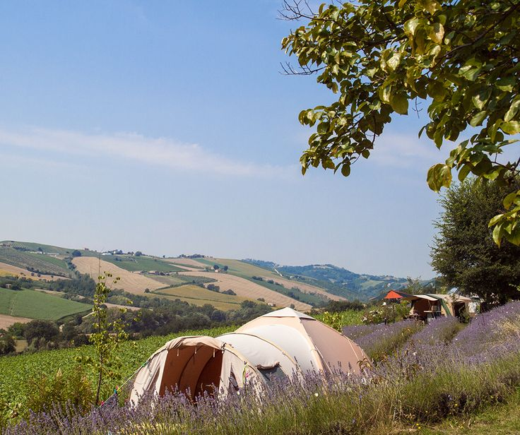 Lavanda Blu Organic Agriturismo, Marches, Italy. Camping on an organic lavender and olive oil farm http://www.organicholidays.com/at/2529.htm