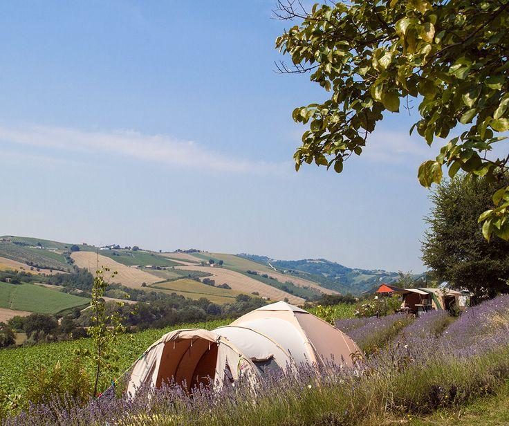 Kleine rustige camping bij de boer waar niets moet behalve genieten van wat Le Marche Italië u te bieden heeft. Mini camping dichtbij de Adriatische zee.