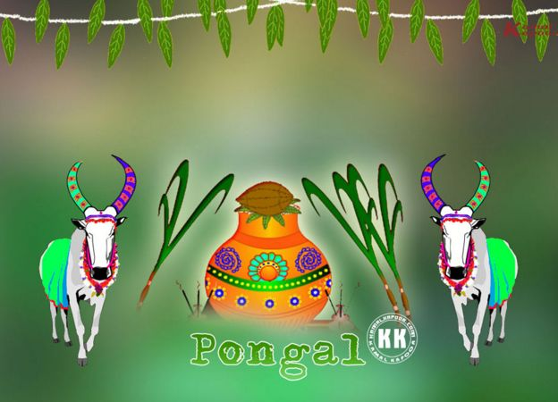 Happy Pongal Images 2017: Hello everyone welcome back first of all I wish you Happy Pongal everyone. In India 2 famous places Telangana and Andhra Pradesh and Tamil Nadu Pongal festival celebrating grandly. so guys in this post i will update latest Pongal images, Happy Pongal Images, Pongal HD Images, Pongal Photos, Pongal Pictures, Happy Pongal Pics, Pongal Pics. So guys check out and if you like my collection please share with your family and friends thanks once again.