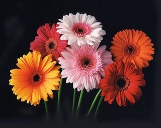 My Favorite Flower.. They are so Purty ;)