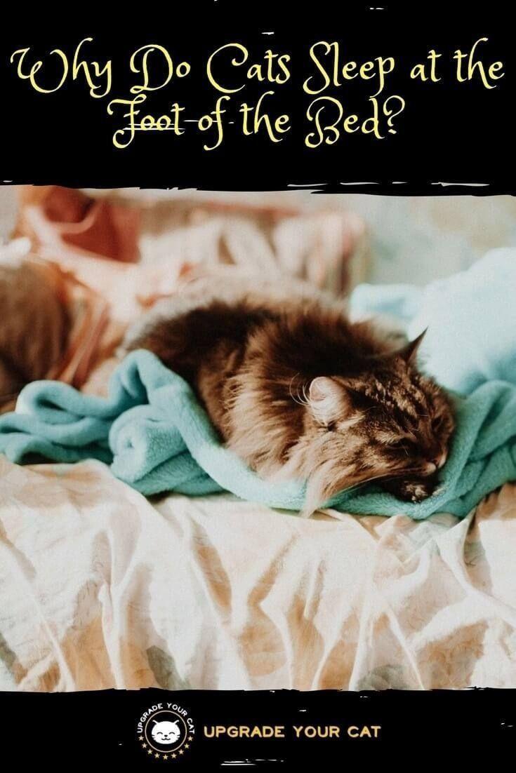 5 Hacks To Get Rid Of Cat Dandruff In 2020 Cat Dandruff Cat Dandruff Remedy Dandruff