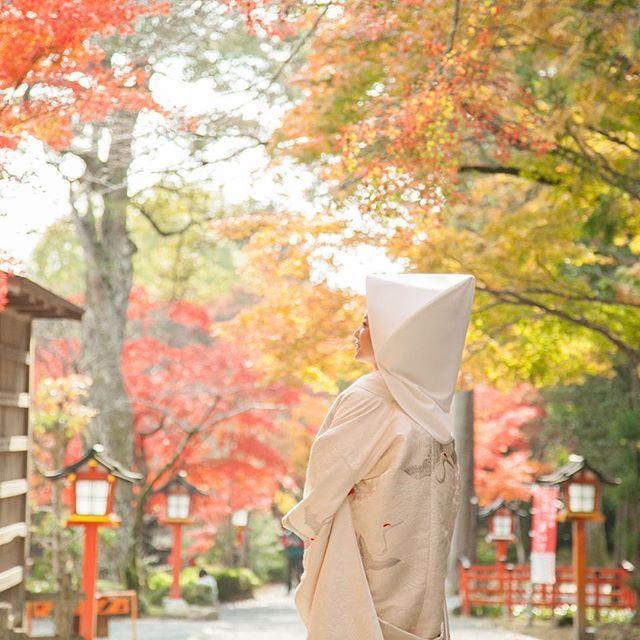 こちらは京都洛西の大原野神社で撮影しました。 美しい紅葉が、清らかな白無垢姿の花嫁さまを彩ります。 #大原野神社#挙式#白無垢#和装#kimono#紅葉#お衣裳さわらぎ#京都結婚物語