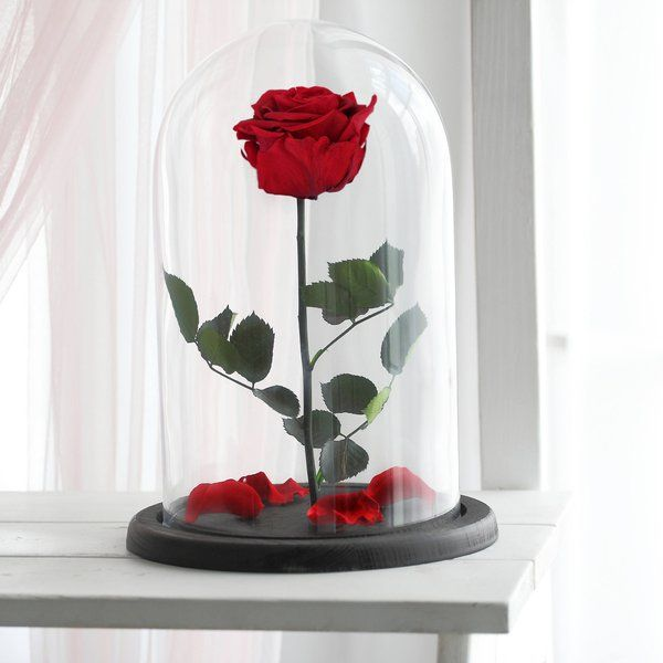 Beauty And The Beast Rose Enchanted Rose Rose In Glass Dome Etsy Enchanted Rose Forever Rose Beautiful Roses Enchanted rose wallpaper beauty and