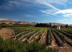 Awatere Valley Vineyard