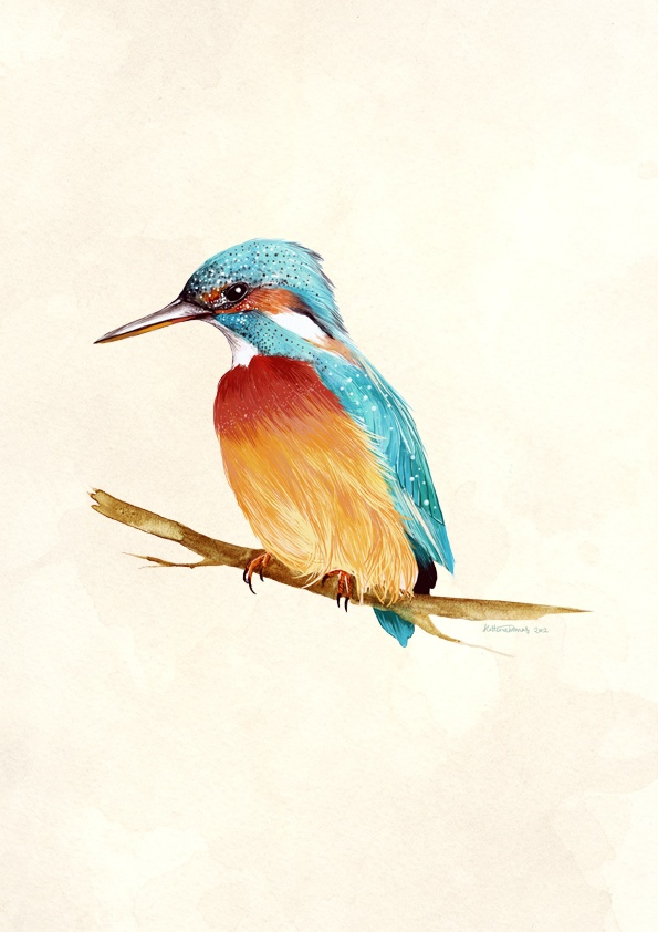 Kingfisher illustration - one of 8 in the vintage bird series I'm doing for a friend's wedding.