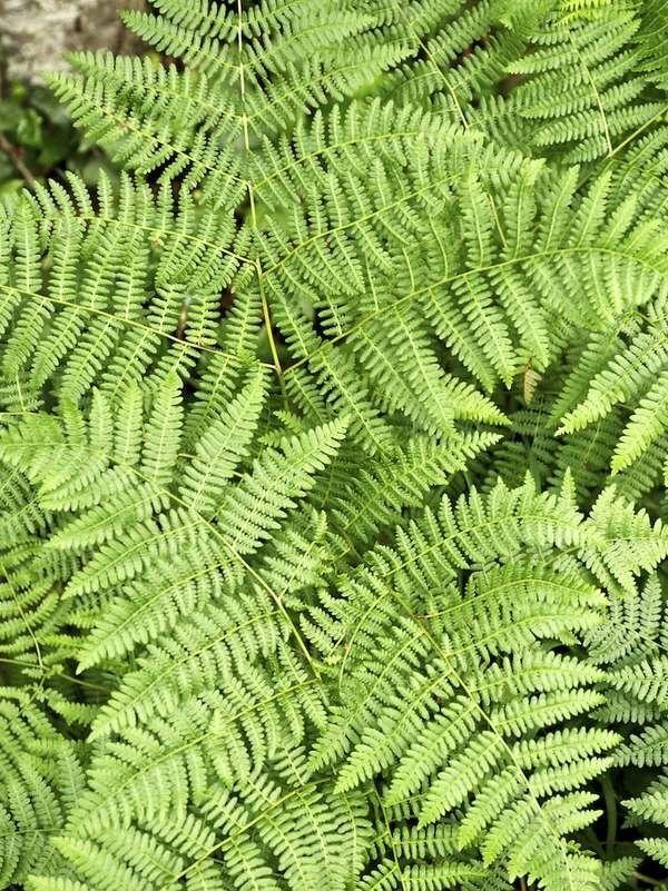 20 Plants For Where The Sun Don T Shine Shade Shrubs Shade Garden Plants Shade Tolerant Plants