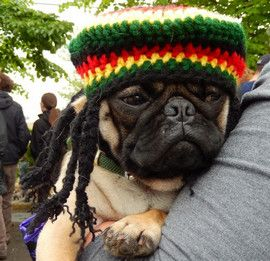 Pug in Costume | 10 cool ideas for pug halloween costumes - Pug ...