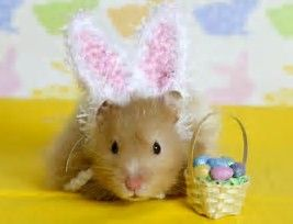 Image result for Hamster Clothes
