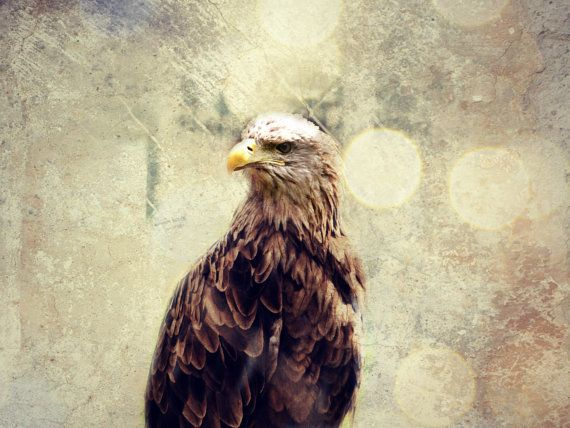 Hawk photography nature photography animal by Katicaphoto on Etsy