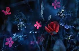 Výsledek obrázku pro Obrázky modrých květin