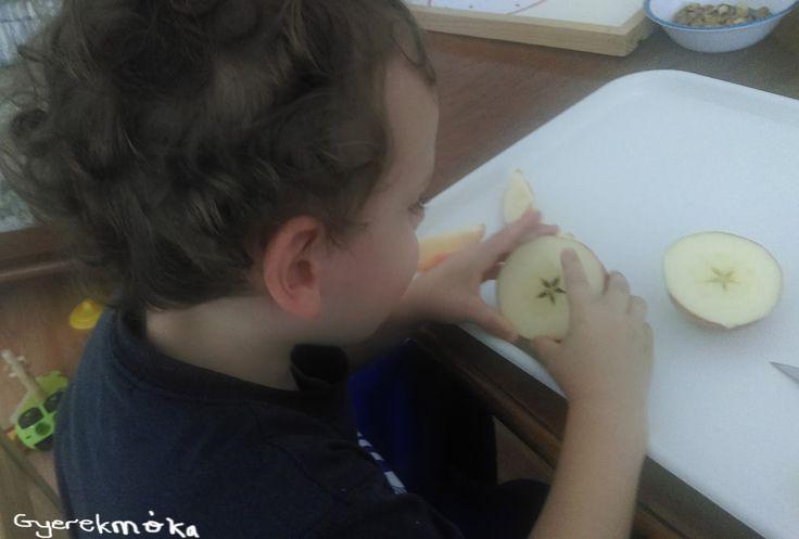 Elsőként megismerkedtünk különböző alma fajtával. Mindjárt meg is kóstoltuk őket megállapítottuk, hogy édes vagy savanykás. Beszéltük a...