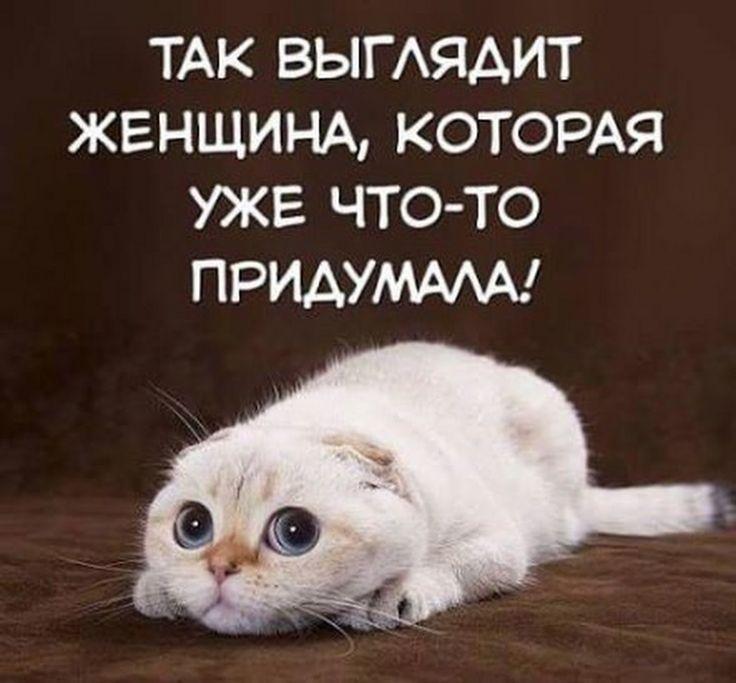Zoo Russia - Google+