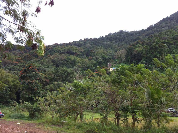 Cerro de Nandy San Lorenzo, Puerto Rico 2012 | Puerto Rico ...