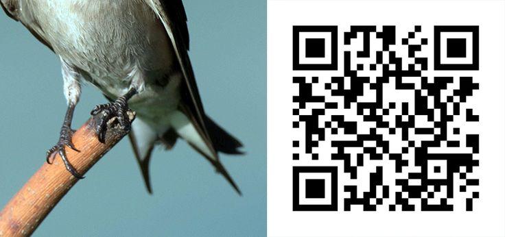 Guess the Bird 36 http://birdwatcher.co.za/guess-the-bird-36/