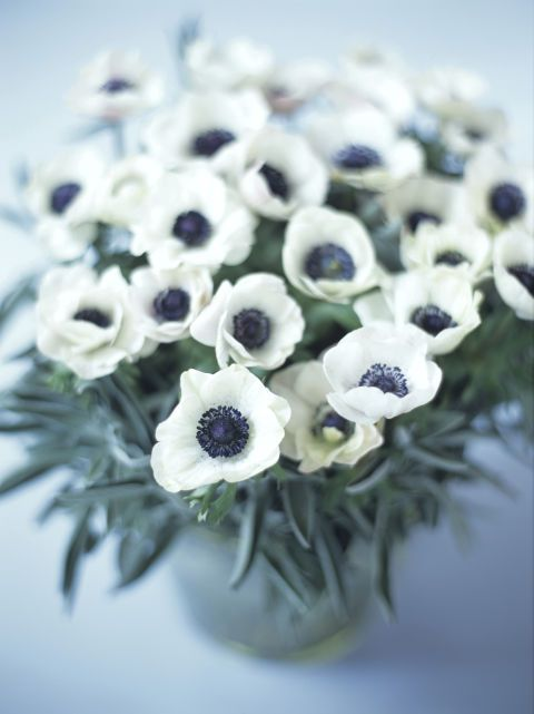 """Anemone - These quirky blooms take their name from the Greek word for wind (anemos) since their lives are so short. The Victorians offered anemones the meaning """"forsaken."""""""