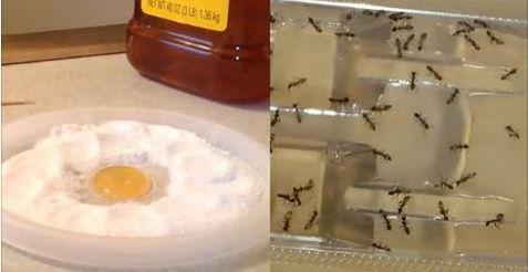 Personne ne veux avoir recourt à un exterminateurpour se débarrasser de ces vilainespetites bestioles qui nous empoisonnent la vie! Vous devez vite trouver une solution?Voici des moyens simples pourvous débarrasser des fourmis, des puces et des cafards avec des ingrédients simples que vous trouverez dans votre maison. LEBORAX: L'acide borique a été utilisé pendant des …