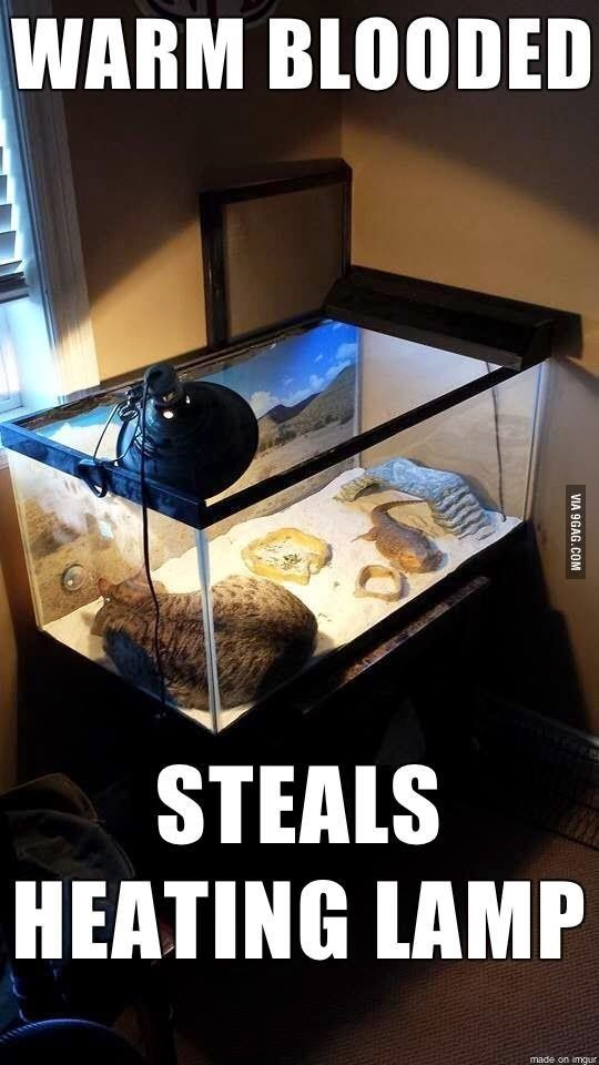 Warm Blooded Cat Steals Heating Lamp | Funny Joke Pictures
