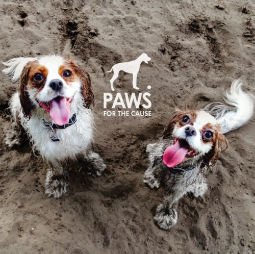 Paws for the Cause Calendar