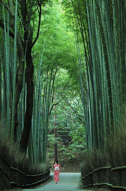Bamboo path in Sagano, Kyoto, Japan