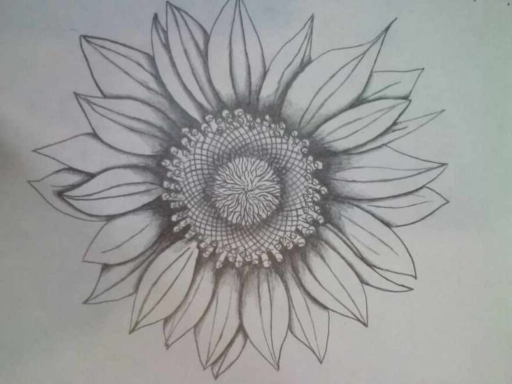 Black And White Sunflower I want this but with petals missing