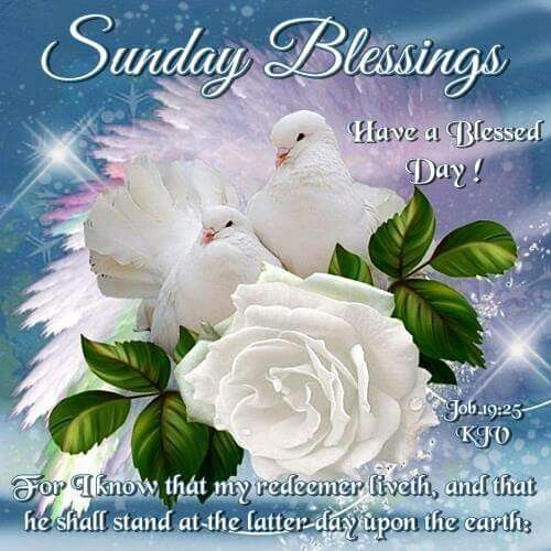 Good Morning Sunday Rose : Images about blessings on pinterest blessed sunday