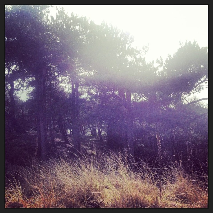 #tree #formby #beach #photography #creative