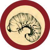 GIANTmicrobes   Bookworm (Anobium punctatum)