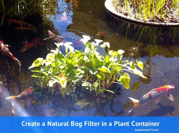 350 best pond and bog water plants images on pinterest for Oxygenating plants for garden ponds